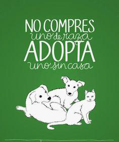 ¿Quieres #adoptar? Hay miles de #perros y #gatos en busca de hogar, entra en el post para que veas dónde puedes adoptar en donde vives #Mexico #Animal #Love