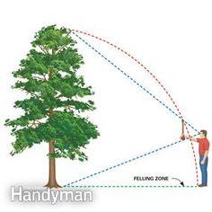 Estimate the felling zone