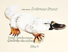 EMA M: O Ornitorrinco Branco