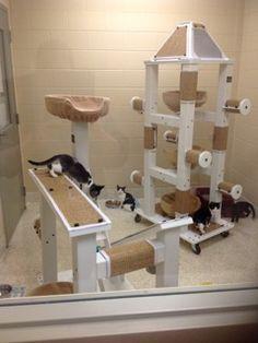 Six Strategies for Increasing Animal Adoptions at Shelters | Animal Behavior and Medicine Blog | Dr. Sophia Yin, DVM, MS