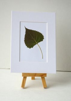 Un-framed Real Green Eastern Cottonwood Leaf Pressed Art - 5 by 7 inches. $15.00, via Etsy.