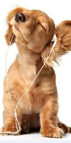 I love music -- check out my earphones . . .