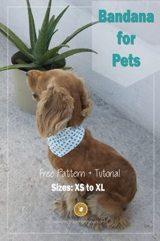Free Dog Bandana Pattern DIY: for all Sizes! - My Golden Thimble Sewing Patterns For Kids, Sewing Projects For Beginners, Sewing For Kids, Free Sewing, Sewing Ideas, Diy Projects, Clothes Patterns, Sewing Tips, Sewing Tutorials