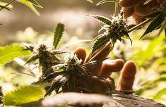 #Ohio Becomes 25th Medical Marijuana State! #mmj | #CannabisNow Magazine