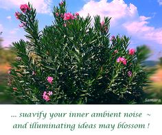 ... suavify your inner ambient noise ~ and illuminating #ideas may blossom !