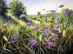 Scabious and Wild Basil