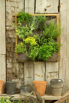"It's a living ""painting"". Terrain's Long Vertical Garden is a rustic wood-framed box outfitted with fiber felt wall pocket planters made of 100 percent recycled fibers; it measures 24 by 22 by 2 inches ). Great for kitchen herbs. Herb Garden, Vegetable Garden, Garden Plants, Home And Garden, Balcony Garden, Garden Art, House Plants, Garden Frame, Plantador Vertical"