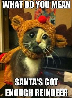 What do you mean, Santa's got enough reindeer | Funny memes and rage comics.  Awwww....
