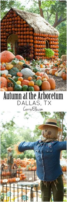 Autumn at the Arboretum (My Favorite Thing About Dallas in the Fall)
