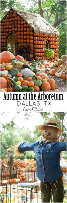 Pumpkin Village, Autumn at the Arboretum, Dallas Arboretum, Fall, Pumpkin Patch Bucket List Pumpkin House, Dallas Arboretum, Texas Forever, Texas Travel, Dallas Texas, Fall Pumpkins, Fall Halloween, Cool Places To Visit, Pumpkin Pics