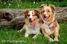 Megan Peterson Photography: Pets Gallery - Megan Peterson Photography - Pet photos - Dog photography