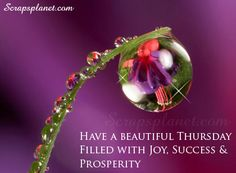 thrusday moring greetings | Wish you Happy Thursday, Good Morning Inspirational Quotes Pictures ...