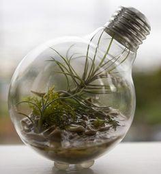BLOG ::: Gecko Adesivos de Parede ::: Transforme lâmpadas queimadas em vasos de plantas