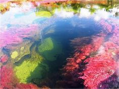 """- """"Rainbow River"""" Float in the River of Seven Colors (Cano Cristales) in Colombia /Caño Cristales, Colombia. Algae blooms give this river up to 7 colors Rainbow River, Lago Powell, Dakota Do Norte, Great Places, Places To See, Amazing Places, Beautiful World, Beautiful Places, Lake Hillier"""
