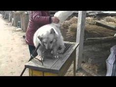 Animal Cruelty in China.
