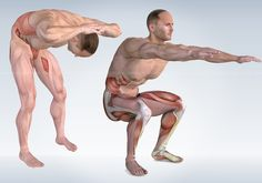 Anatomy 3D Illustration for Core Training Fitness exercises