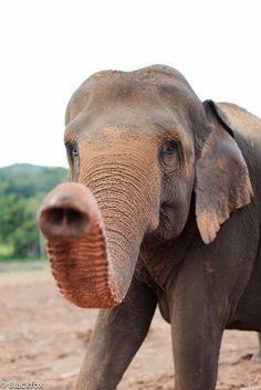 I want a pet elephant so bad
