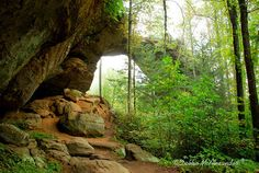 Gray's Arch, Red River Gorge, KY