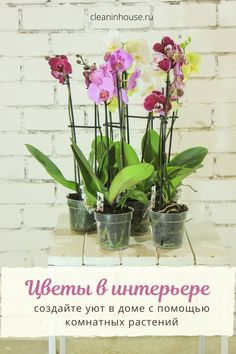 Orchid Pot, Moth Orchid, Orchid Plants, Flower Plants, Indoor Plant Pots, Best Indoor Plants, Potted Plants, Orchid Leaves, Household Plants