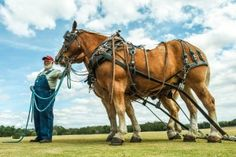 #drafthorse #clydesdale Photo by www.sandypoirier.com