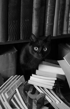 'Definitely wasn't me who tipped all these books over!'
