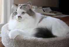 My cat Aria. Chris, Canton, GA. 11/15/14.