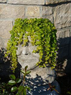 """Myrtle"" hypertufa planter"