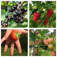 """[Una storia di armonia tra l'uomo e la natura] Agriturismo Dalaip dei Pape, luglio 2013, esterno giorno. """"Noi coltiviamo piccoli frutti."""" """"Ah, bello!"""" dico io, e intanto penso a piccole mele, minuscole pere, microscopiche angurie. Capirete il mio imbarazzo nello scoprire che questi """"piccoli frutti"""" non sono altro che i più conosciuti frutti di bosco, ma coltivati (e quindi non di bosco). Chiaro, no?"""
