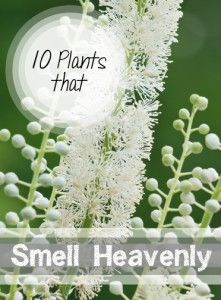 10+Plants+that+Smell+Heavenly