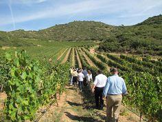 ACEVIN presenta los datos del nuevo Informe sobre la Demanda Turística en las Rutas del Vino | SoyRural.es