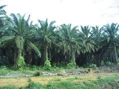 Palm Trees 8