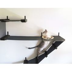 cat wall shelves - CatastrophiCreations Deluxe Cat Playplace Hammock Climbing Activity Handcrafted Wall-Mounted Cat Tree, Onyx >>> To view further for this item, visit the image link. (This is an affiliate link) Cat Activity, Cat Perch, Cat Hammock, Cat Playground, Cat Room, Cat Condo, Pet Furniture, Modern Cat Furniture, Furniture Design