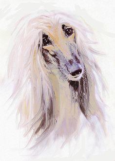 afghan hound- dog art on FineArtAmerica