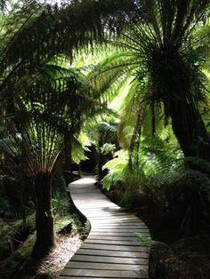 Cape Otway National Park Baumfarne #australia #australien #travel #rainforest #greatoceanroad #forest #nationalpark