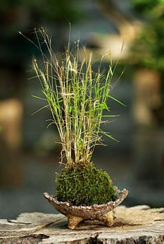 Kusamono bonsai