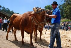 Feria del Ganado de San Antonio, in Moya. Gran Canaria. Every year on June. Get to know all kind of farm animals. There is entertainment too...Nice place to go with your family  :)