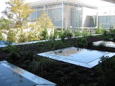 Green roof technology comes in a range of forms. Think solar panels, energy saving measures, stormwater management systems, blue roofs and more. Modern tech allows us to utilize green roof systems and green infrastructure better than every before. Find out more here! Urban Heat Island, Green Roof System, Growing Grass, Blue Roof, Modern Tech, Urban Agriculture, Rain Barrel, Roof Design, Solar Panels