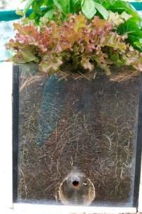 Why you should use soil in your wicking bed reservoir over rocks, sand,and shadecloth