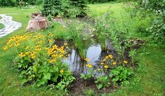 Rain Gardens are the latest trend in landscaping. Excess water and drainage problems can be solved easily without sacrificing beauty with a rain garden! Bog Garden, Water Garden, Garden Plants, Bog Plants, Vegetable Garden, Natural Landscaping, Garden Landscaping, Landscaping Ideas, Rain Garden Design