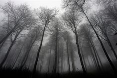 Google Afbeeldingen resultaat voor http://media.treehugger.com/assets/images/2011/10/tree-photo-contest-winner.jpg