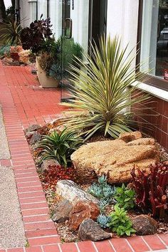 42 Best Ideas for Front Yard Rock Garden - About-Ruth Succulent Landscaping, Landscaping With Rocks, Front Yard Landscaping, Landscaping Ideas, Olive Garden Dressing, Small Succulents, Succulents Garden, Indoor Succulents, Growing Succulents