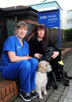 Marvellous #dog Milo saved by PDSA vets! PDSA #vets have saved the life of an extraordinary dog from Cardiff, who acts as a guide dog for his blind canine 'brother'.
