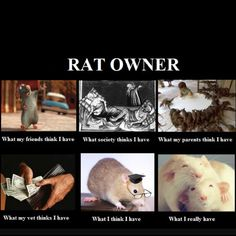 I don't personally own a rat, but this still made me laugh...