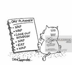 a day in the life of my cat. Nap Quotes, Funny Quotes, Nap Day, I Need A Nap, Infant Loss, Day Planners, Space Exploration, Funny Cartoons