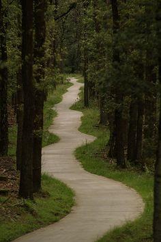 als eindeloze linten liggen hier de fietspaden uitgerold door de bossen en de hei