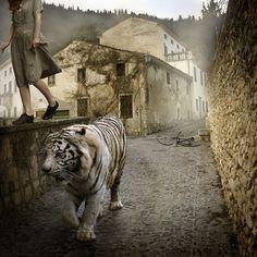 tom chambers photography - Animal vision
