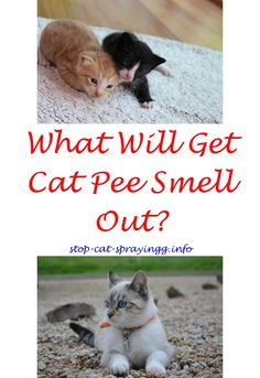 cat spraying on furniture cat pee out of carpet odor eliminator