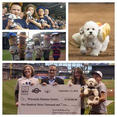 It's Wisconsin Humane Society Day here at Miller Park, all thanks to Hank, the famous Ballpark Pup who first appeared at Brewers Spring Training camp on February the day of the first workout for… Milwaukee Wisconsin, Milwaukee Brewers, Baseball League, Spring Training, Humane Society, Dog Stuff, Pup, Fans, Sports