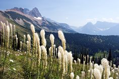 Hiking the Highline Trail in Glacier National Park - Flathead Beacon