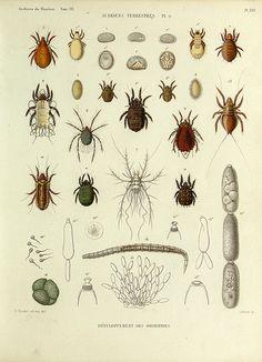 Histoire naturelle des acariens qui se trouvent aux environs de Paris,. Paris,Impr. de J. Claye,1855